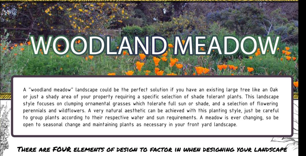 woodland meadow descriptive banner